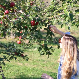 Fall in Markham: All the Apples, Cider, and Spice